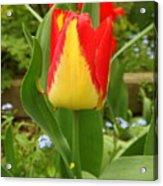 Mister Tulip Waving Salute Acrylic Print