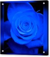 Misty Blue Rose Acrylic Print
