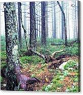 Misty Forest Gaudineer Scenic Area Acrylic Print