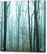 Misty Forest Acrylic Print by John Greim