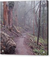 Cloud Forest- Mount Sutro Acrylic Print