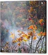 Misty Maple Acrylic Print