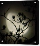 Misty Moon Acrylic Print