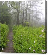 Misty Morning Cranberry Glades Acrylic Print