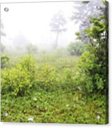 Misty Morning In The Glades Acrylic Print