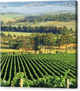 Misty Morning In Yarra Valley Vineyards Near Healesville, Victoria, Australia Acrylic Print