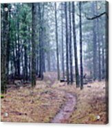Misty Morning Trail In The Woods Acrylic Print