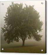 Misty Morning Tree Acrylic Print