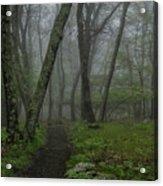 Misty Path Acrylic Print