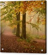 Misty Pathways  Acrylic Print