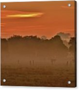 Misty Ranch Acrylic Print