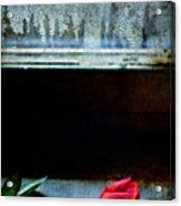 Misty Rose Acrylic Print