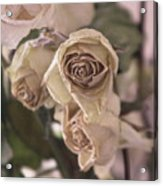Misty Rose Tinted Dried Roses Acrylic Print