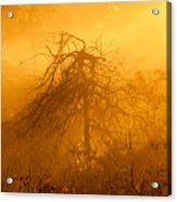 Misty Swamp Sunrise Acrylic Print