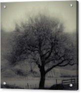 Misty Tree Acrylic Print