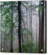 Misty Winter Forest Acrylic Print