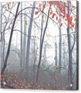 Misty Woodland Showing The Last Fall Color Acrylic Print
