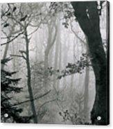 Misty Woods, Juniper Acrylic Print