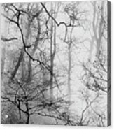 Misty Woods, Whitley Mill Acrylic Print