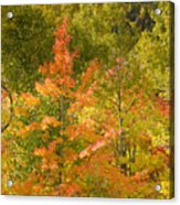 Mixed Autumn Acrylic Print