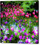 Mixed Flowers And Tulips Acrylic Print