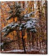 Mixed Seasons Acrylic Print