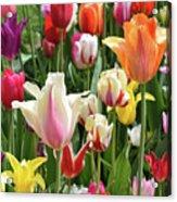 Mixed Tulips Acrylic Print