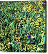 Mixed Wildflowers In Texas Acrylic Print