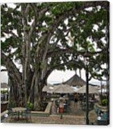 Moana Surfrider Banyan Court - Waikiki Beach Acrylic Print