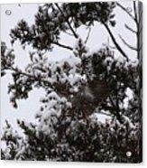 Mocking Bird Greeting 2 Acrylic Print