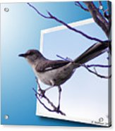 Mockingbird Branch Acrylic Print