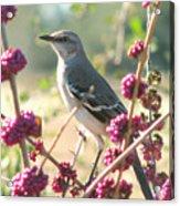 Mockingbird Heaven Acrylic Print