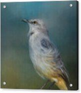 Mockingbird On A Windy Day Acrylic Print