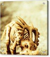 Model Styracosaurus Skeleton Acrylic Print