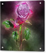 Modified Rose Acrylic Print