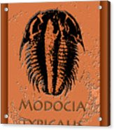 Modocia Typicalis Fossil Trilobite Acrylic Print