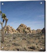 Mohave Desert Acrylic Print