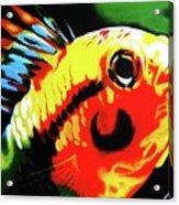 Mohawk Fish Acrylic Print