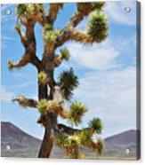 Mojave Joshua Tree Acrylic Print