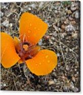 Mojave Orange Acrylic Print