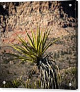 Mojave Yucca Acrylic Print