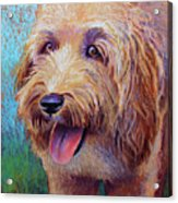 Mojo The Shaggy Dog Acrylic Print