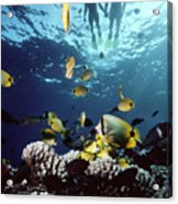 Molokini Snorkeling Couple Acrylic Print