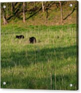 Mom And Cub Acrylic Print