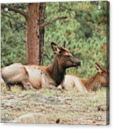 Mom And Kids Taking A Nap Acrylic Print
