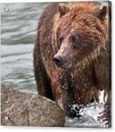 Mom Hunts Haines, Alaska Acrylic Print