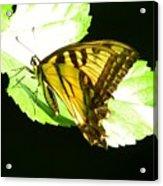Moment Of Life Acrylic Print