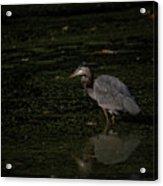 Moment Of The Heron Acrylic Print