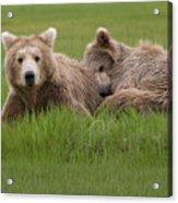 Momma And Cub Acrylic Print
