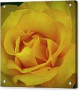 Moms Yellow Rose Acrylic Print